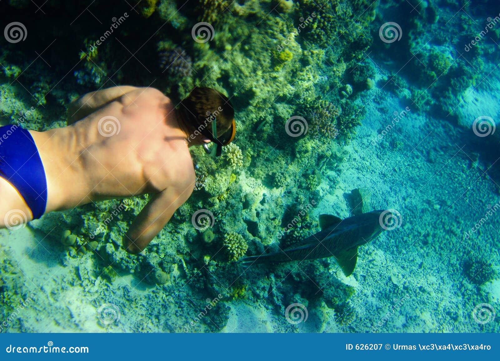 Download Snorkeling стоковое изображение. изображение насчитывающей sinai - 626207