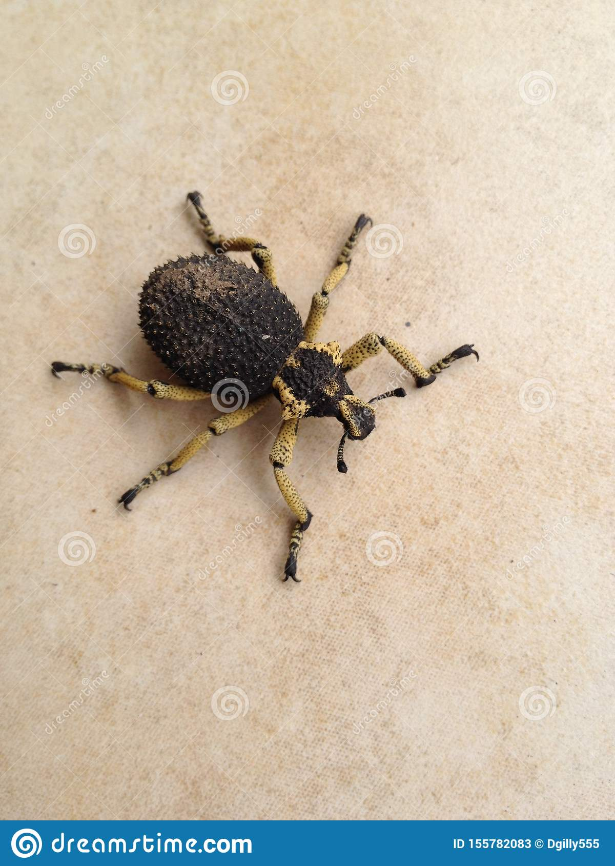 55 Forensic Entomology Photos Free Royalty Free Stock Photos From Dreamstime