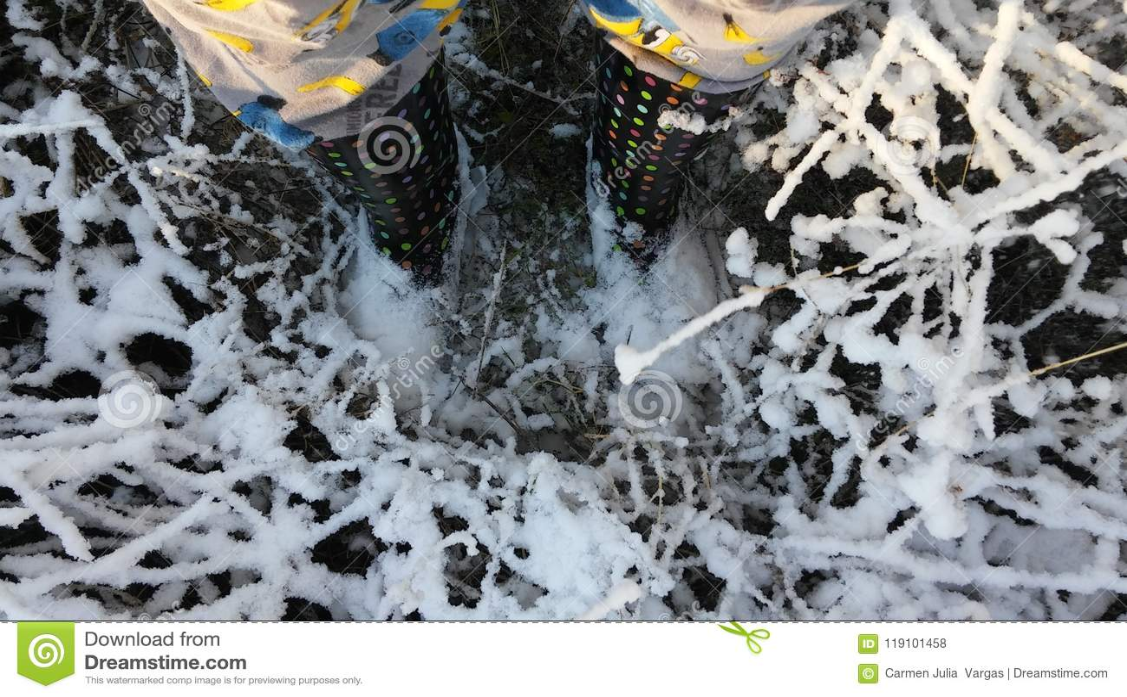 Snow Stock Photo Image Of Cold Morning Snow Austin 119101458