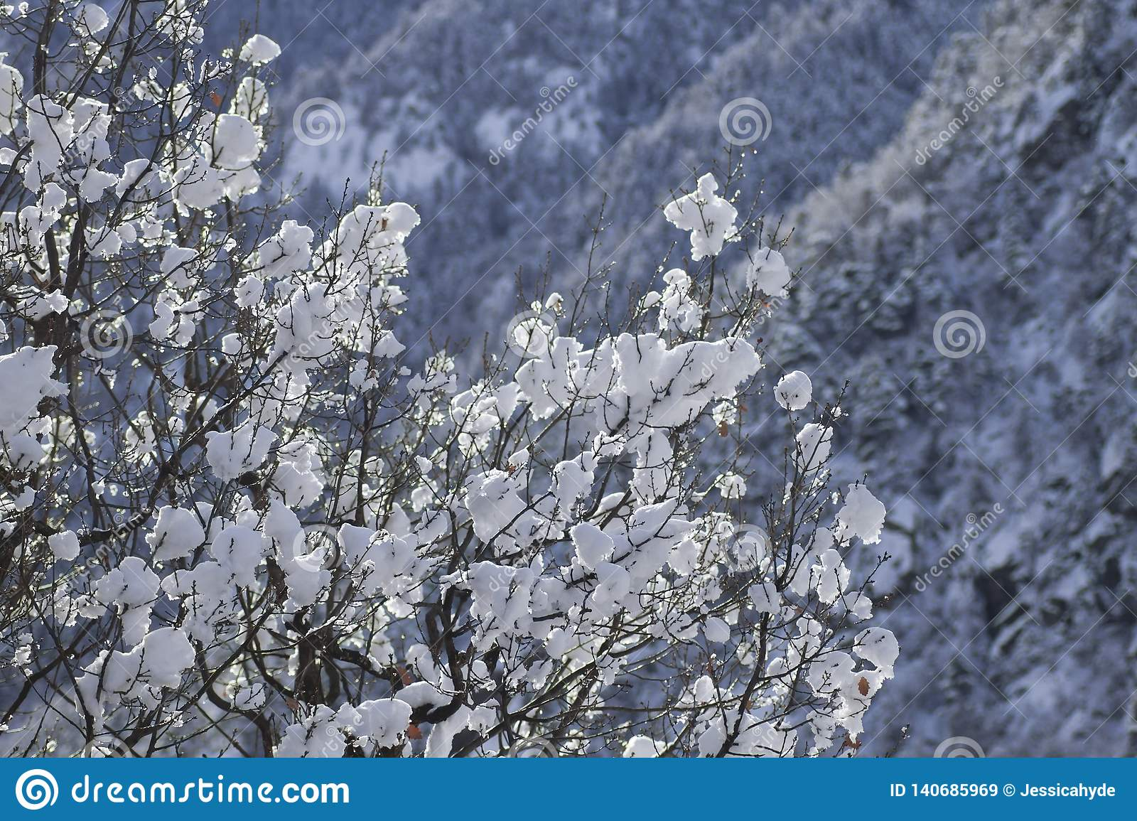 14 Snow Balls On The Branches Of A Tree Stock Image   Image of cold ...