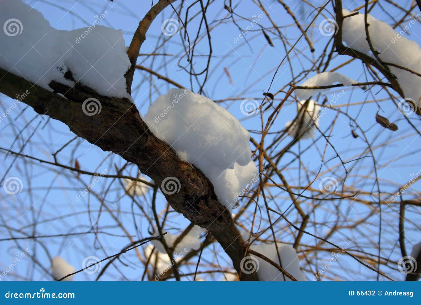 Snow on branch 2