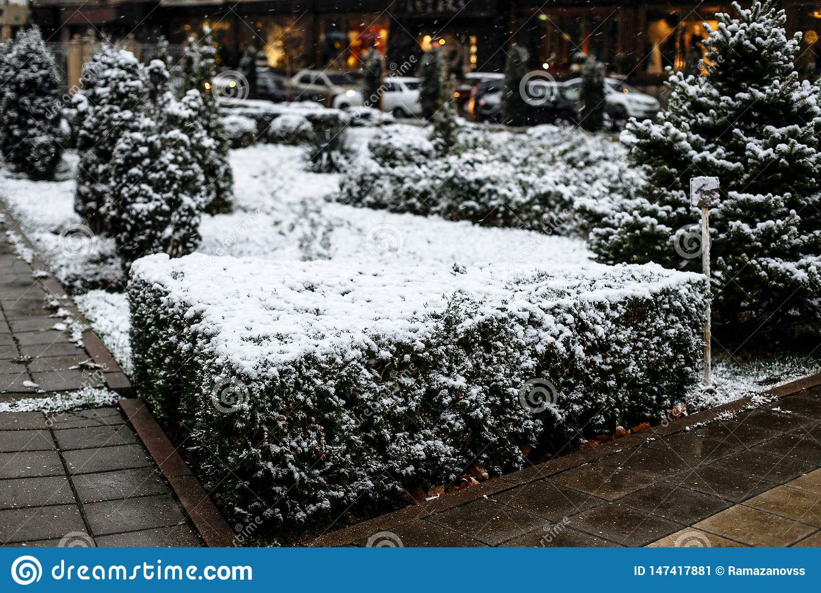 Snow on bushes in the city park
