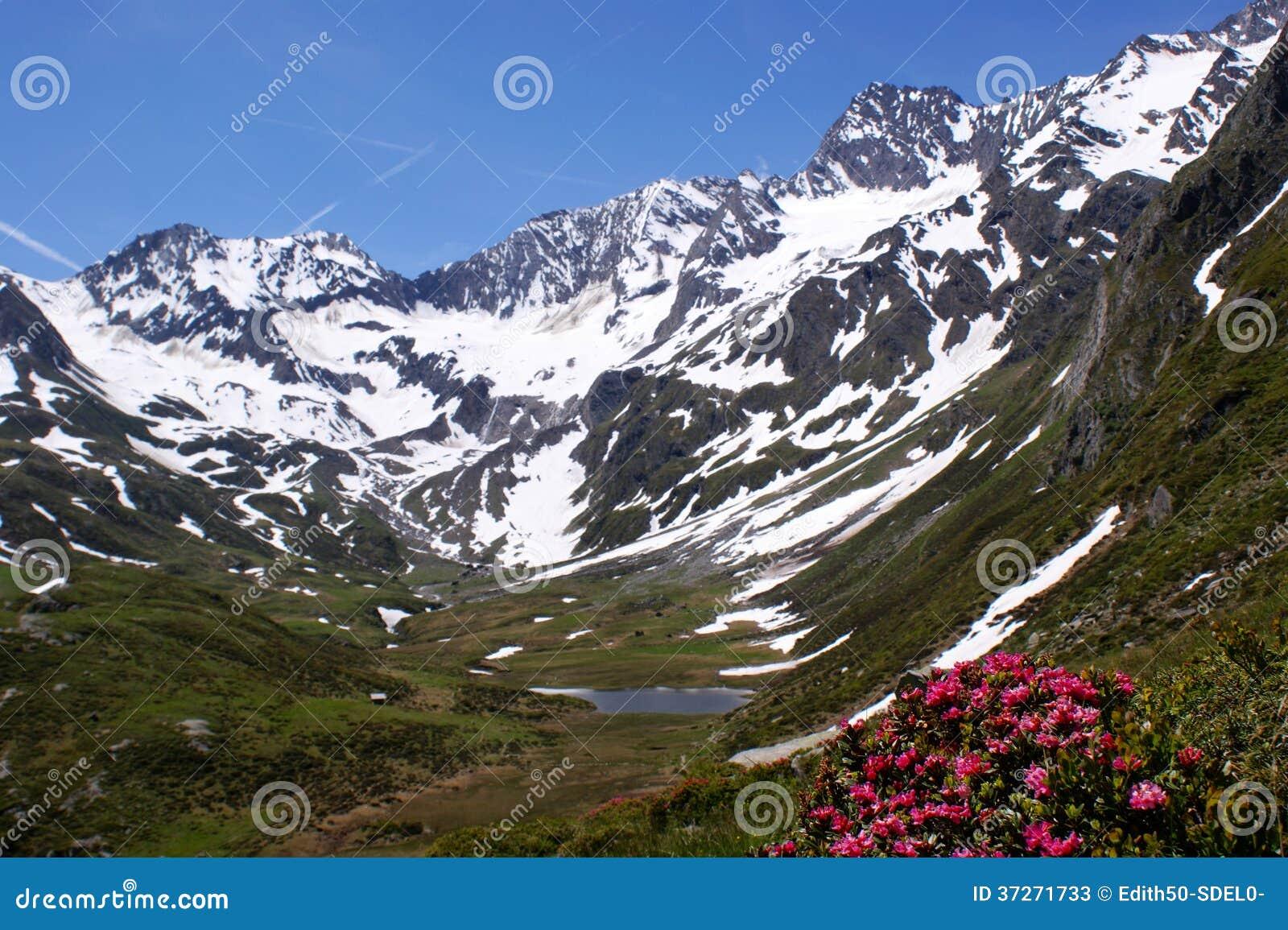 Snow-capped bergen, een meer en alpiene rozen