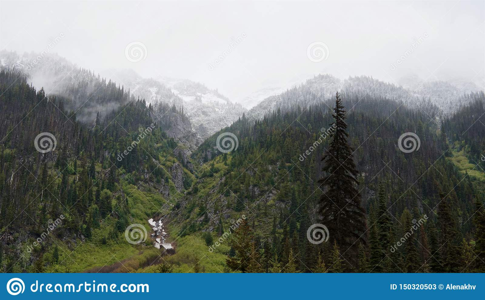 The snow-capped peaks of forest mountains and green grass on the banks of the stream