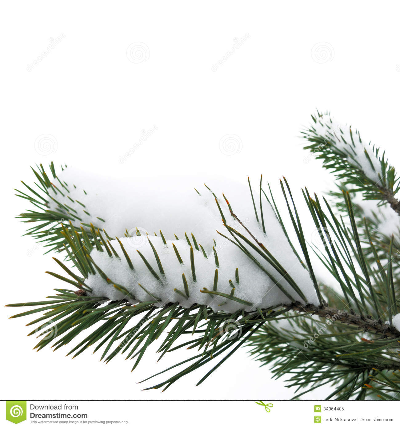 Snow And Christmas Tree On White Background Royalty Free Stock Photo ...