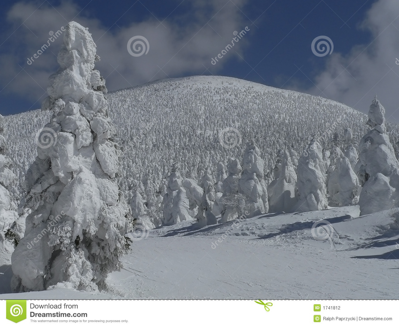 Snow-covered bomen op berghelling