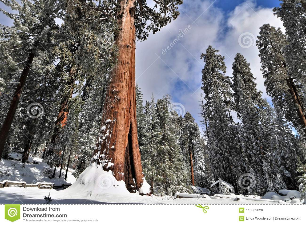 kings canyon lodging visit stevecalderaro gettingthere getting in camping park national california seki cabins sequoia attraction there