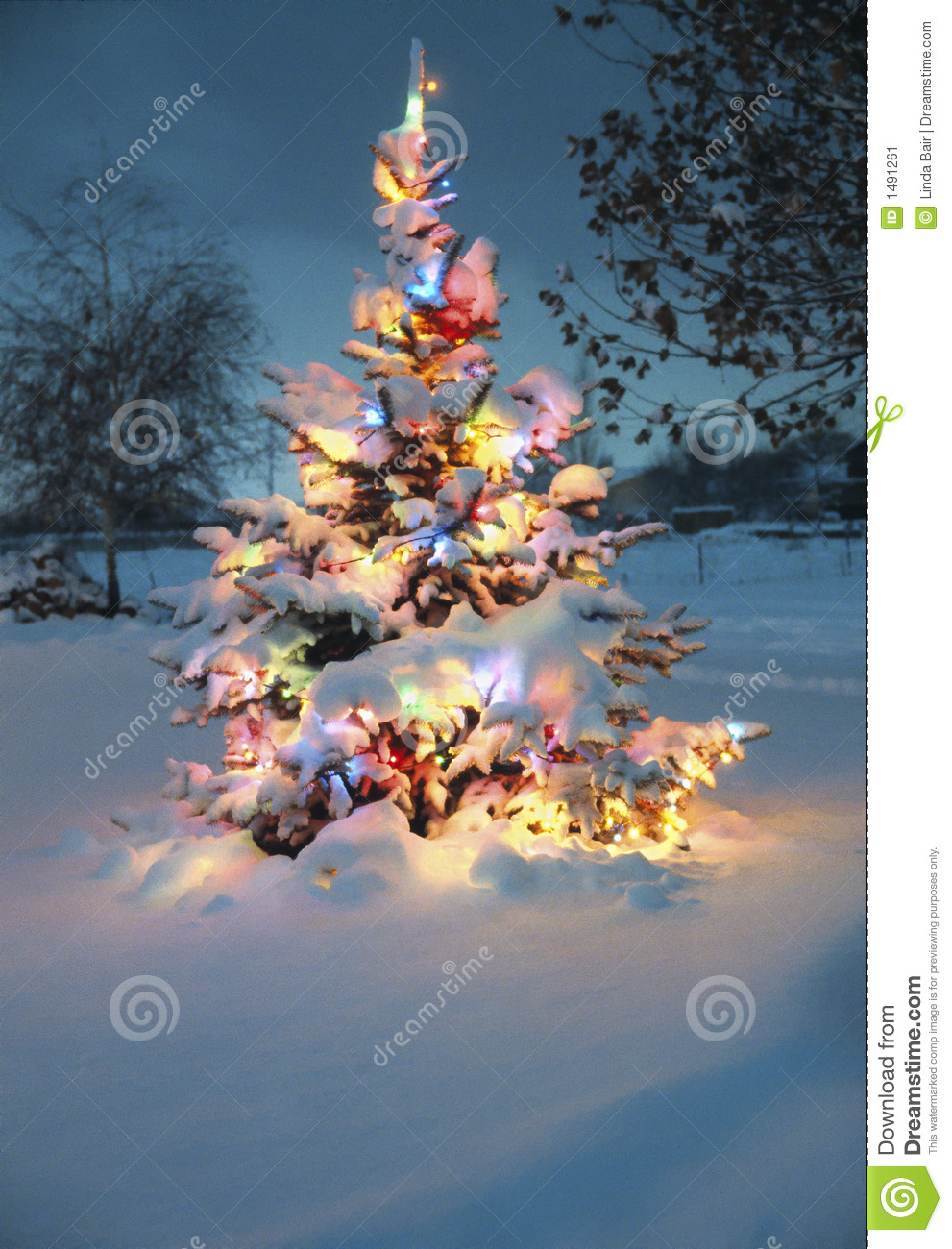 snow covered christmas tree stock image image of achr. Black Bedroom Furniture Sets. Home Design Ideas