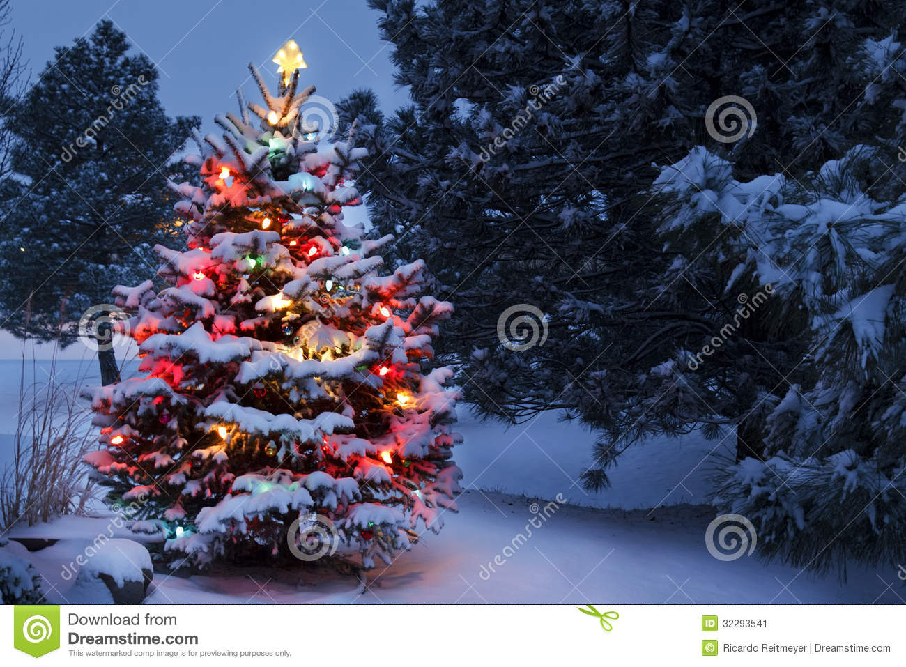 royalty free stock photo download snow covered christmas tree - Snow Christmas Tree