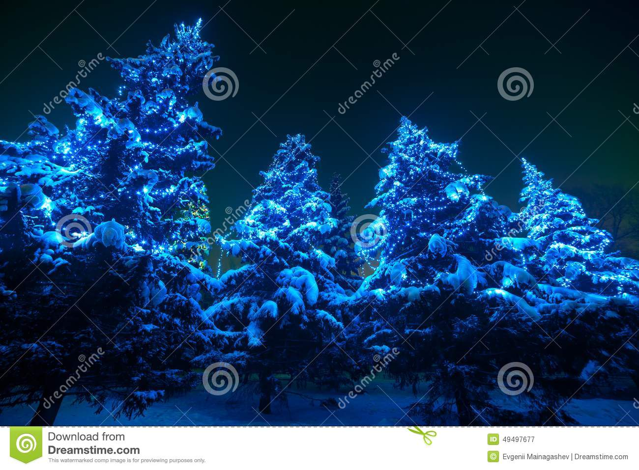snow covered christmas tree lights in a winter stock image. Black Bedroom Furniture Sets. Home Design Ideas