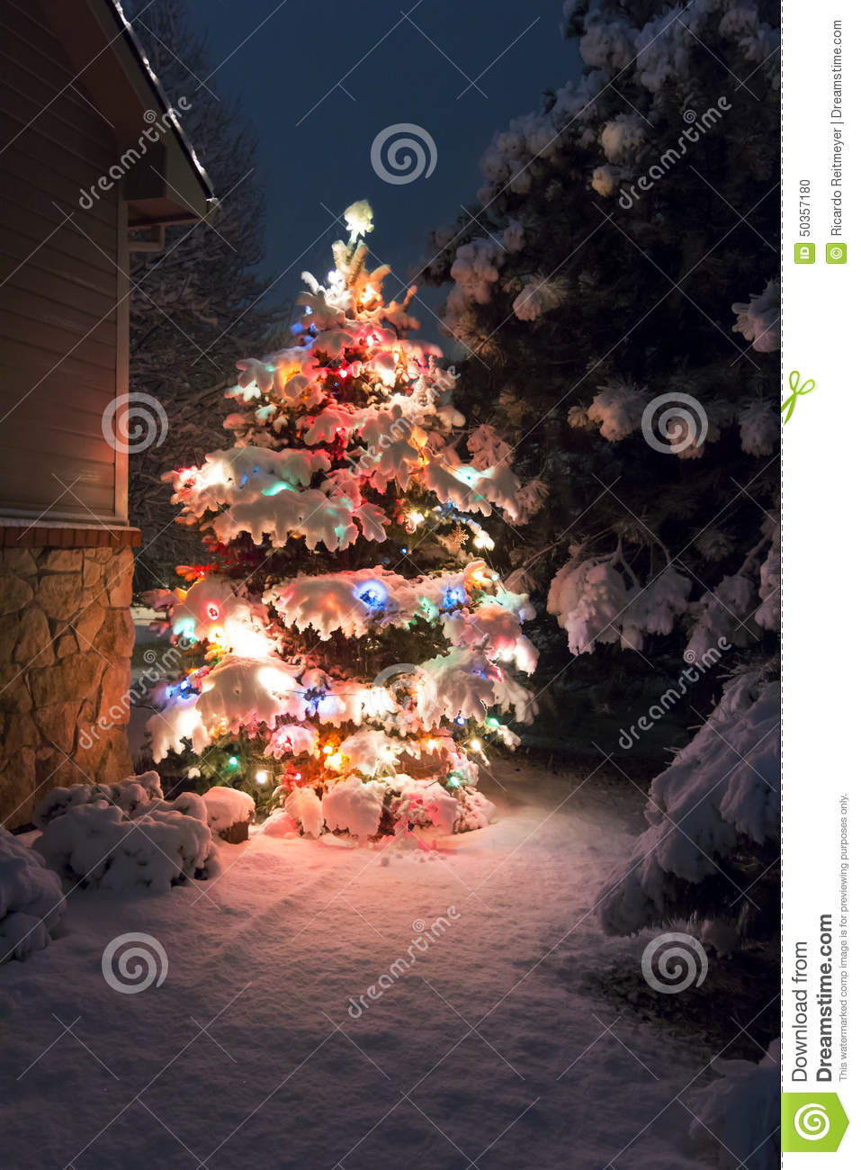 This Snow Covered Christmas Tree stands out brightly against the dark blue tones of late evening light in this winter holiday sce
