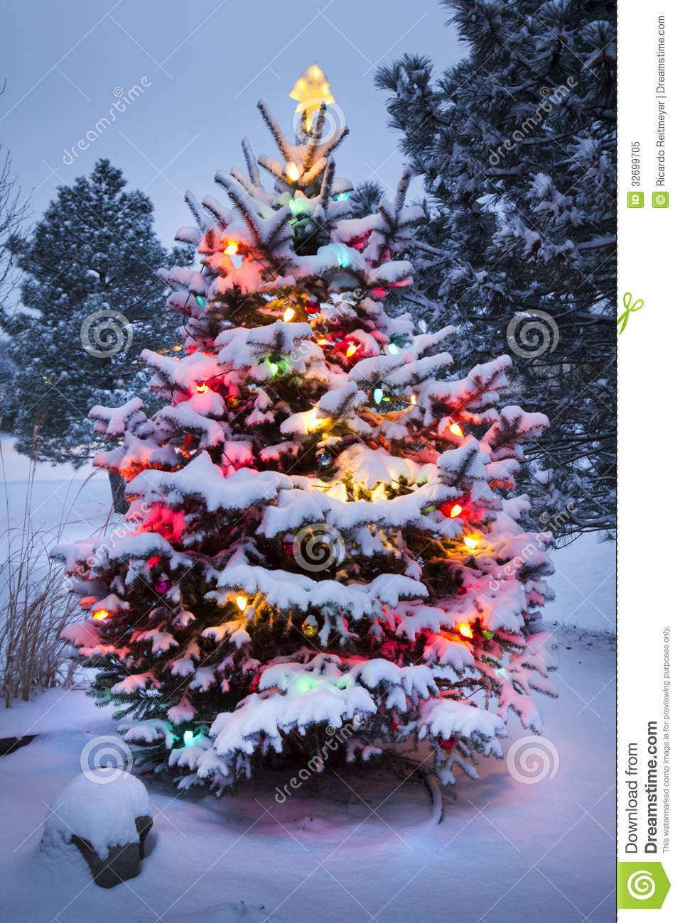 Snow covered christmas tree stands out brightly in stock