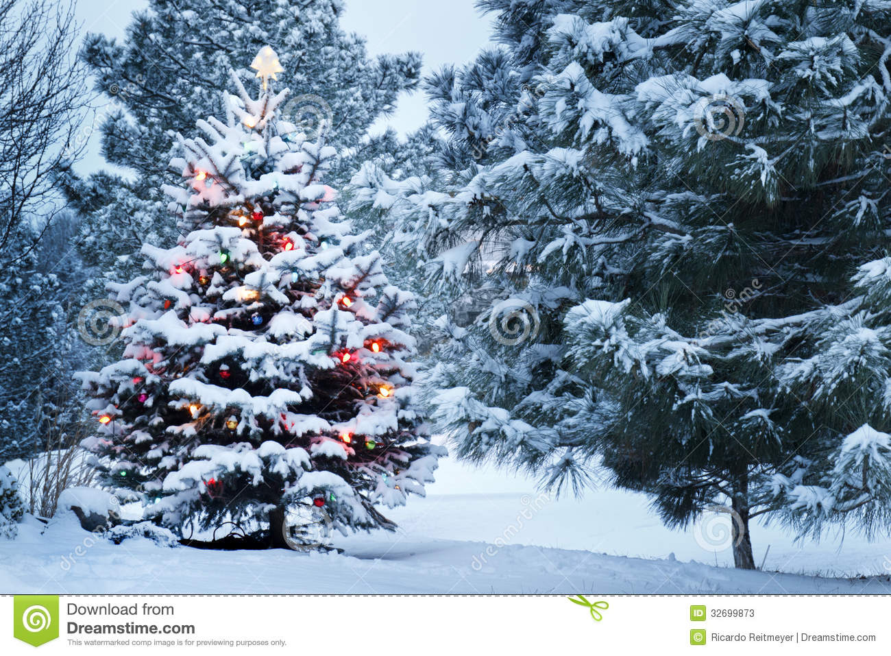 Snow Covered Christmas Tree Stands Out Brightly In Stock Photos ...