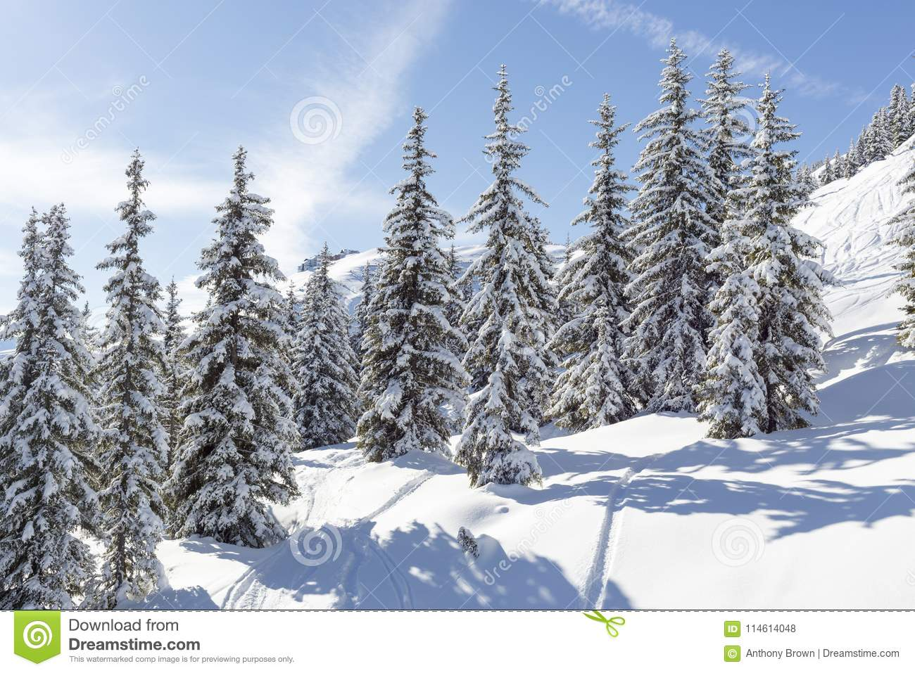 Snow Covered Fir Trees In Austria Stock Photo Image Of Landscape