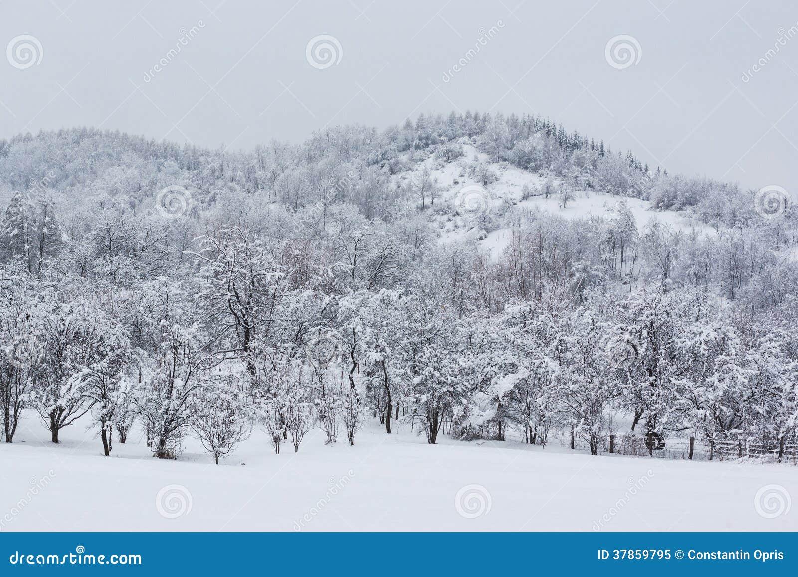 Themes For Christmas Trees