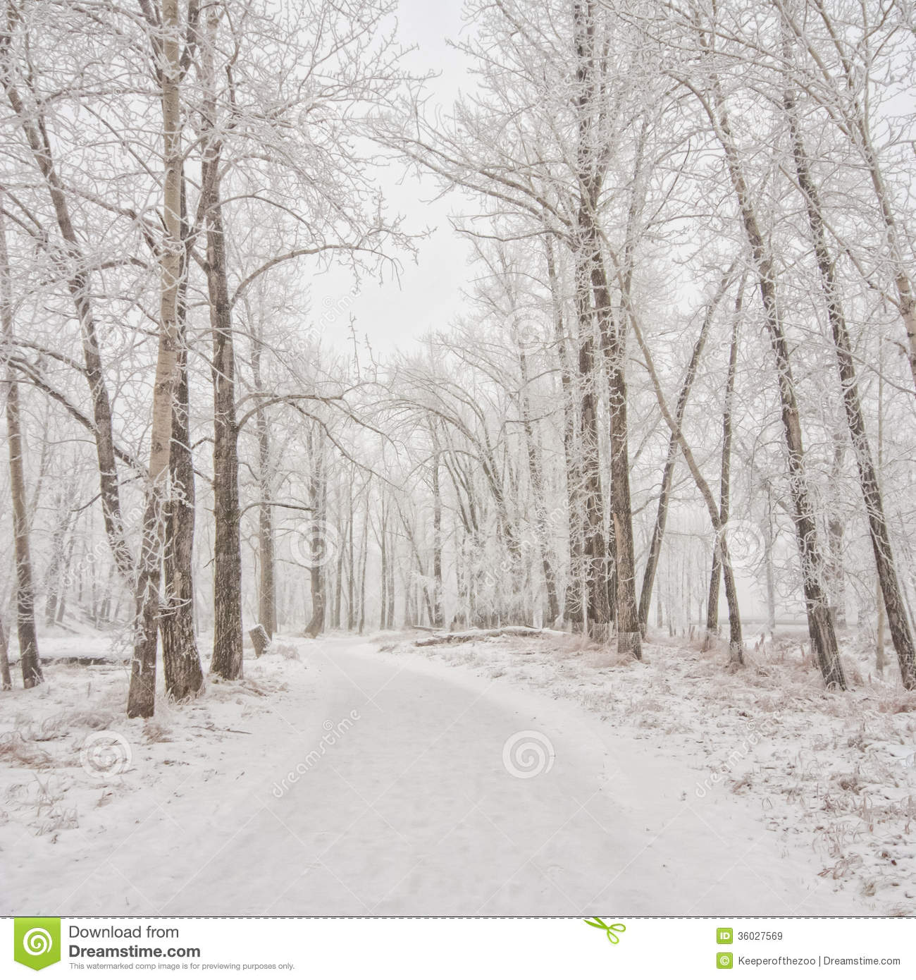 Snow Covered Winter Pathway Royalty Free Stock Images