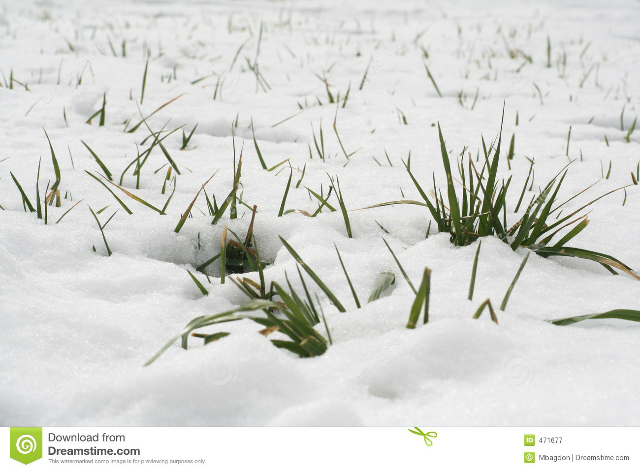 Download Snow and grass stock image. Image of season, grass, lawn - 471677