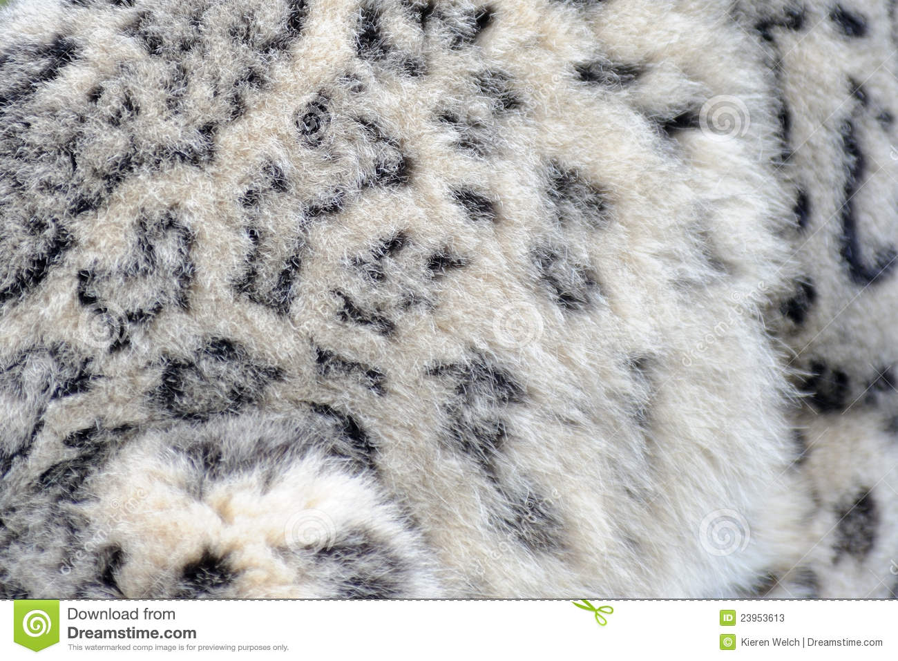 Snow Leopard Fur Stock Photos - Image: 23953613