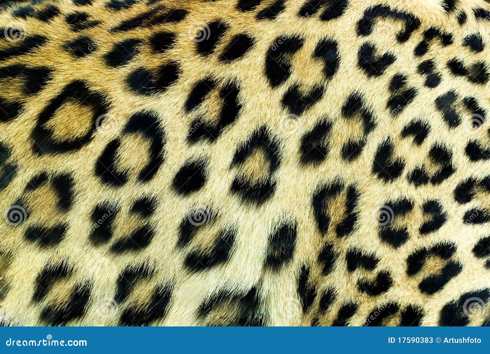 Snow Leopard Skin Www Imgkid Com The Image Kid Has It