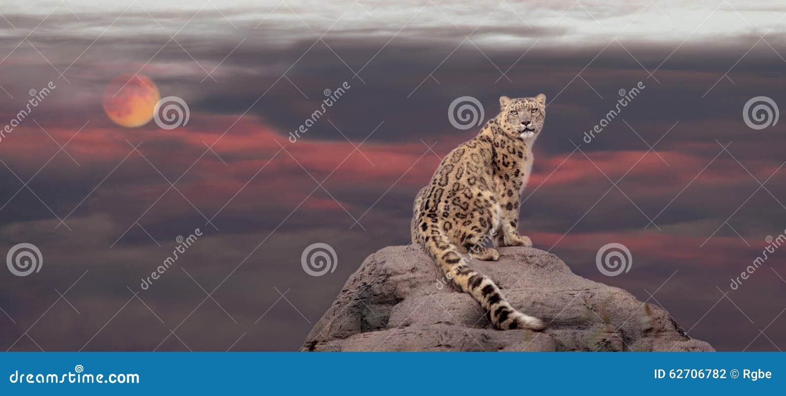 Snow leopard in moon light