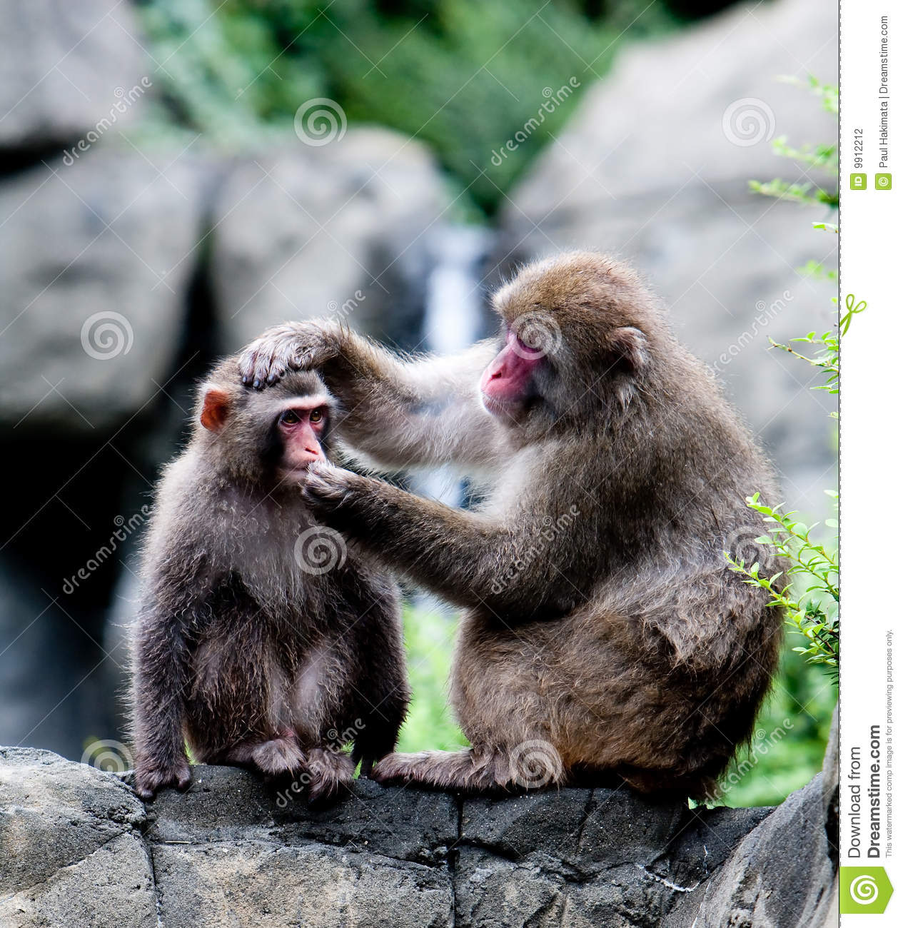 Don't Feed The Monkeys! 3 Ways To Help People Solve Their Own Problems