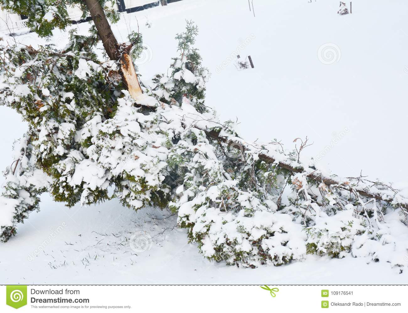 After the Snow Storm: Coping with Snow- and Ice-Damaged Trees.