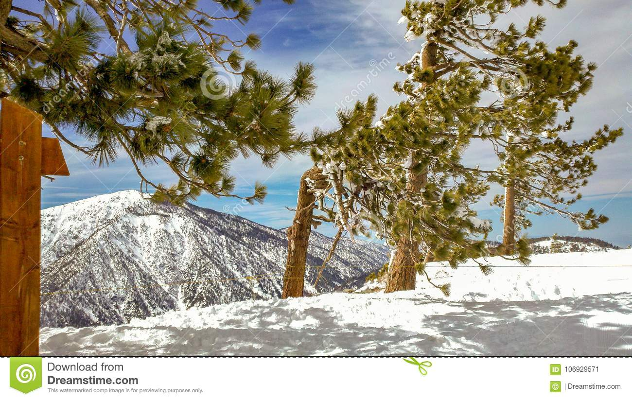 Snow Trees On Mountain Ridge In The Angeles National Forest