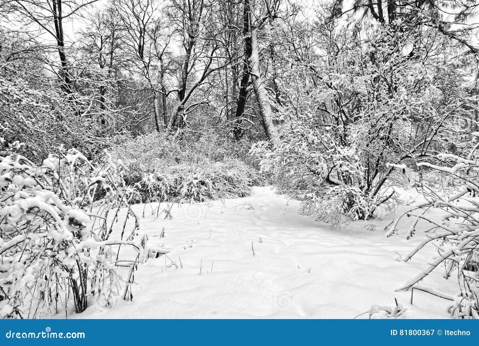 Snowbound парк зимы