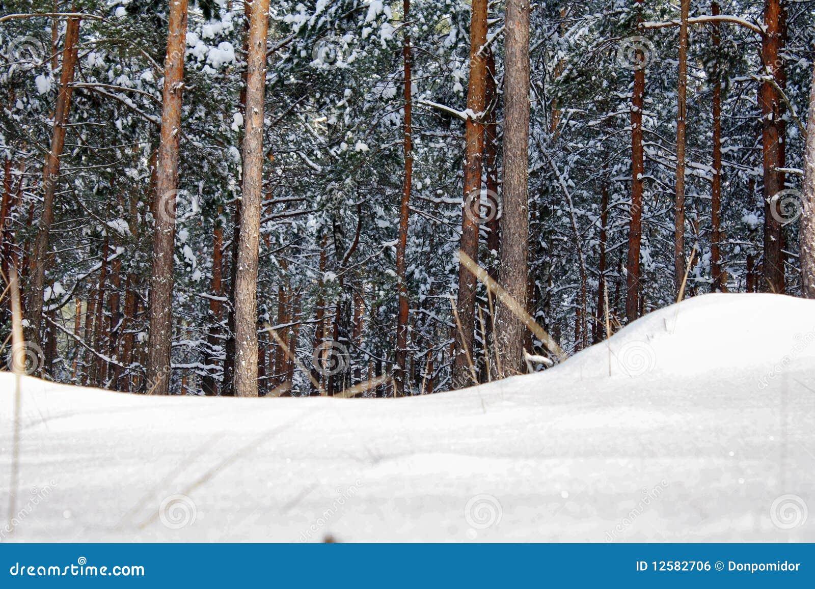 Snowdrift antes da madeira da neve
