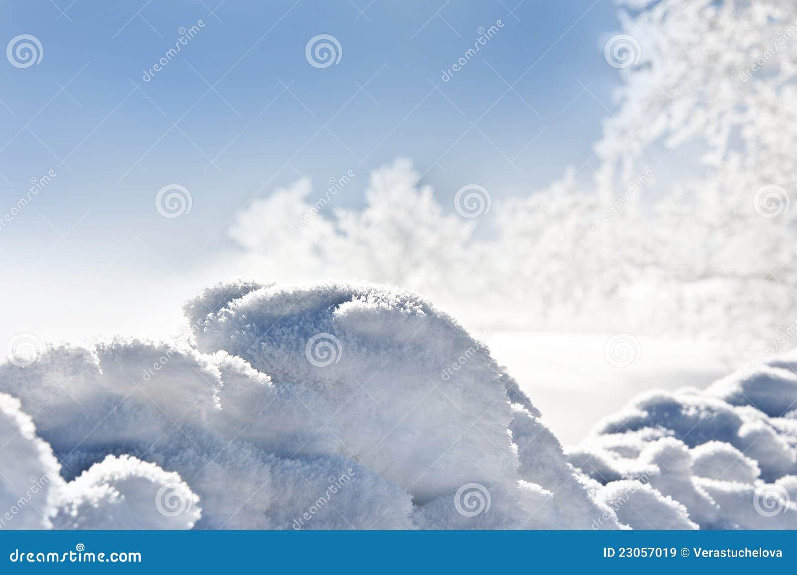 Snowdrift e árvores congeladas