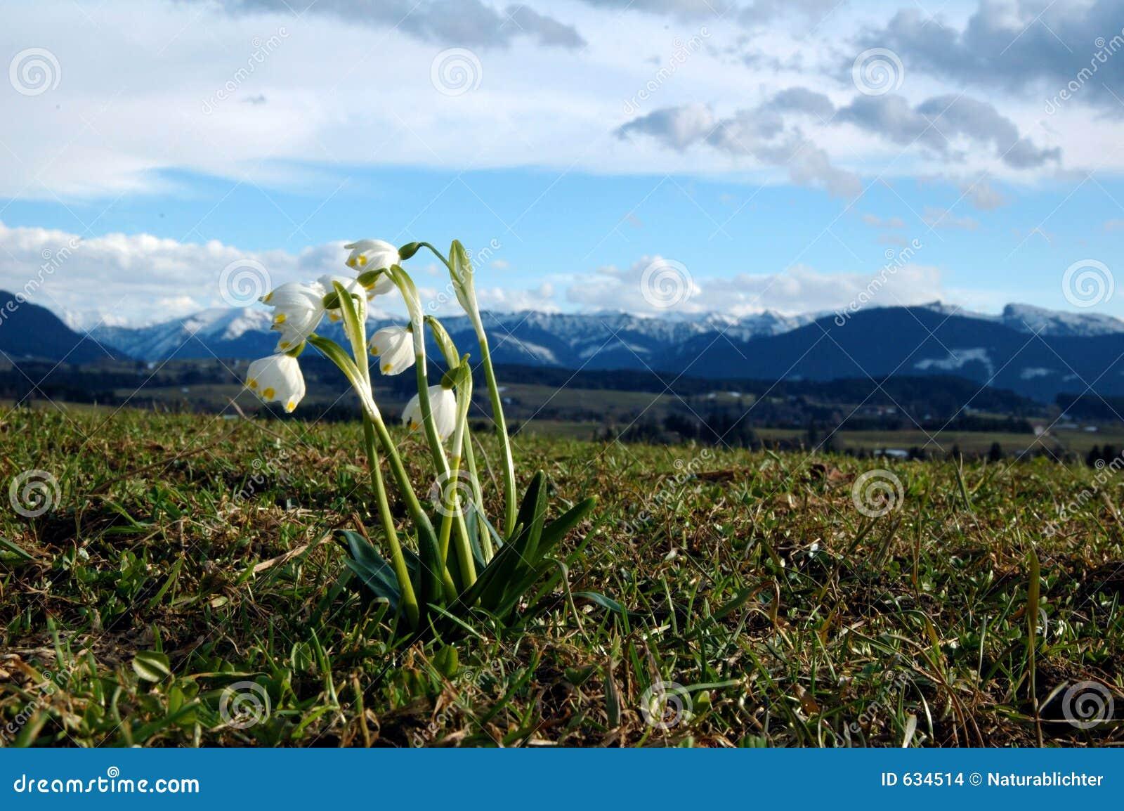 Download Snowdrop баварца alp стоковое фото. изображение насчитывающей ландшафт - 634514