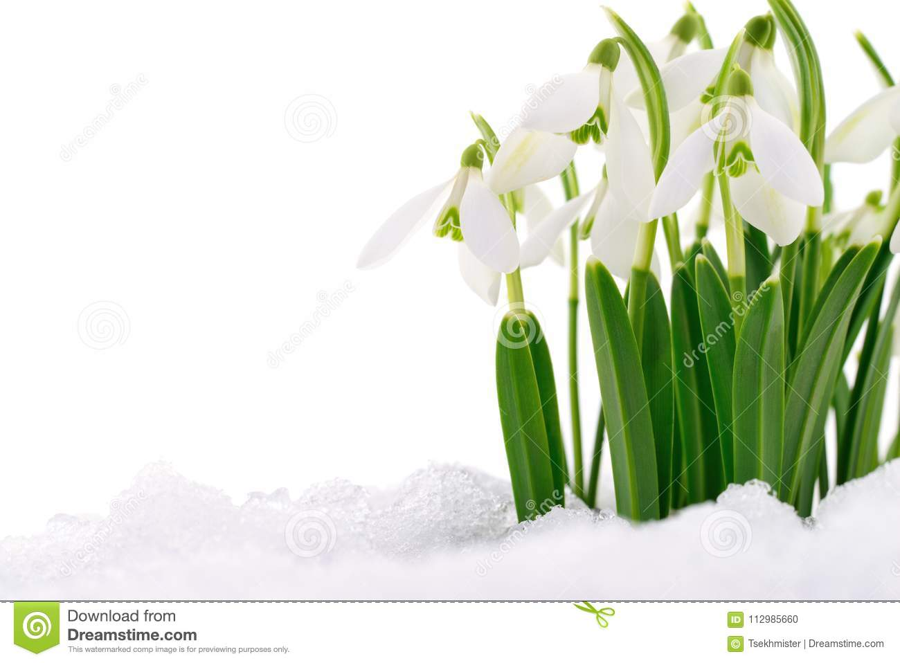 Snowdrop and Snow.