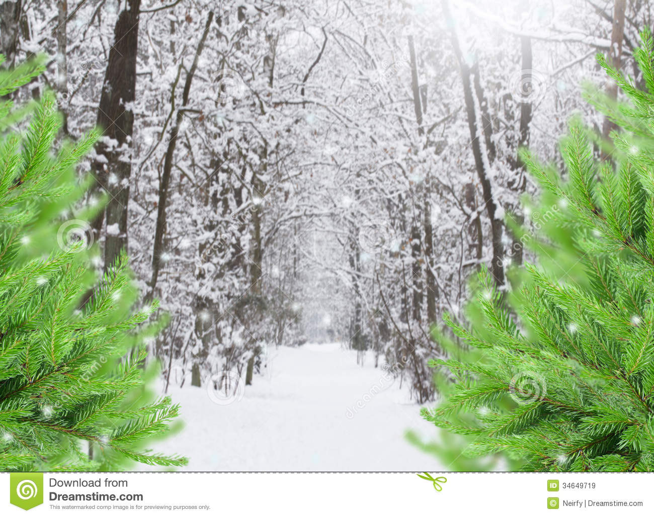 Snowed Forest With Evergreen Trees Stock Image Image Of