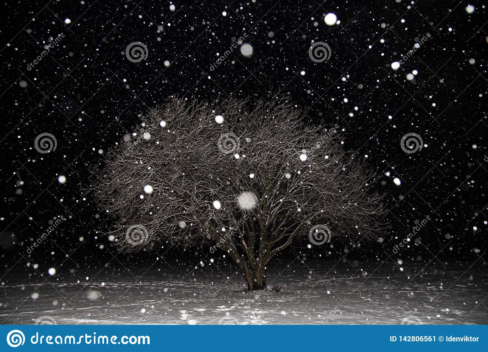 Snowfall, blizzard, snow flakes, winter tree covered snow at night. Beautiful minimalism landscape