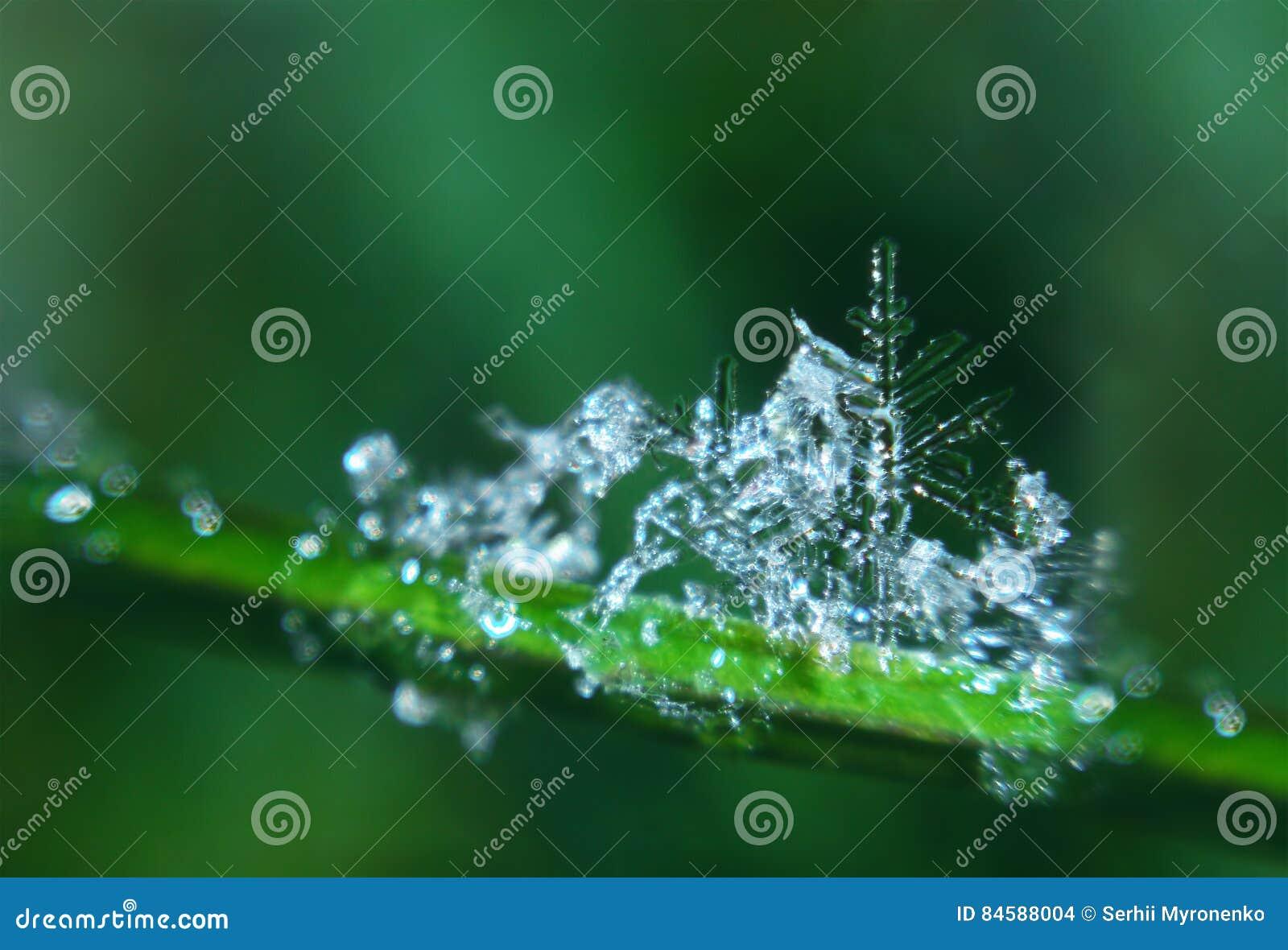 Snowflake like green christmass tree melting