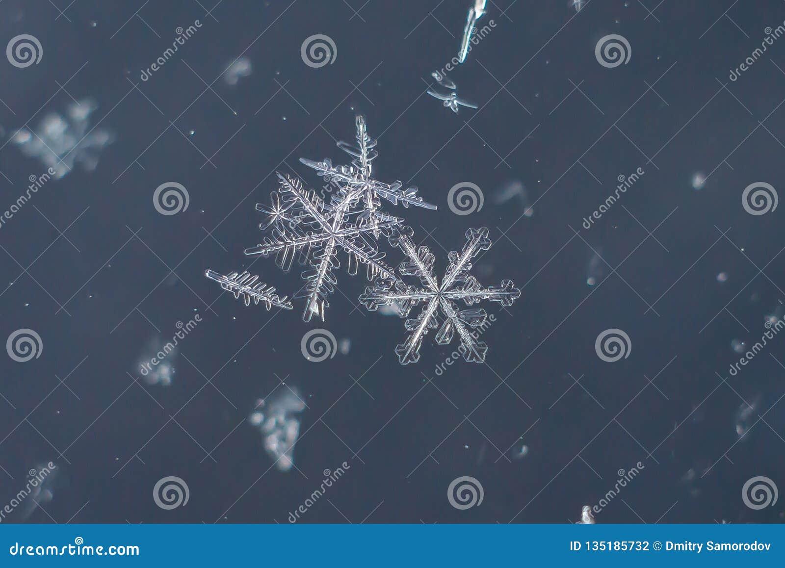 Snowflake Natural Extreme Macro