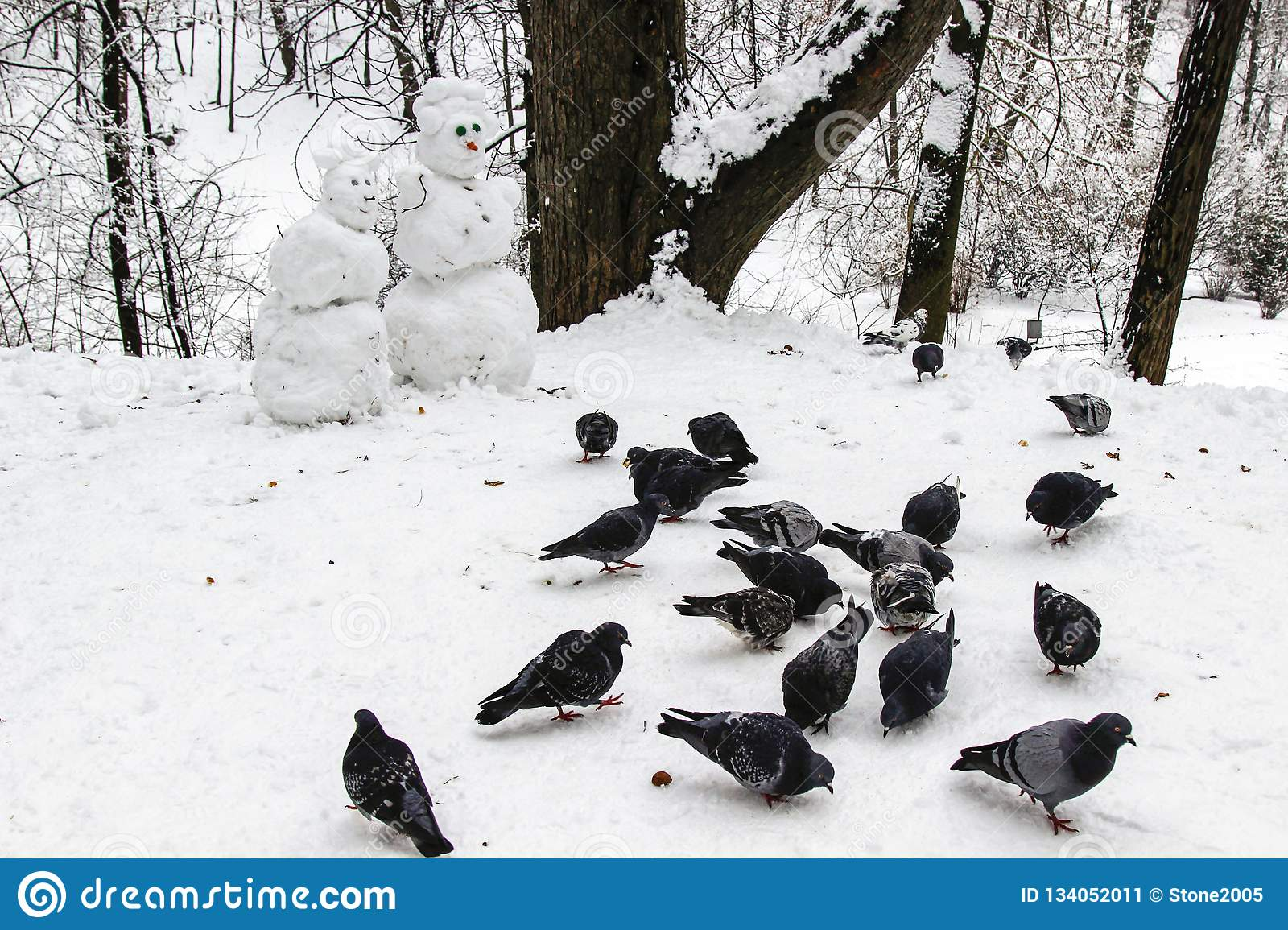 Snowmen couple in the winter forest. Made by hand. A flock of pigeons pecking grain in the snow