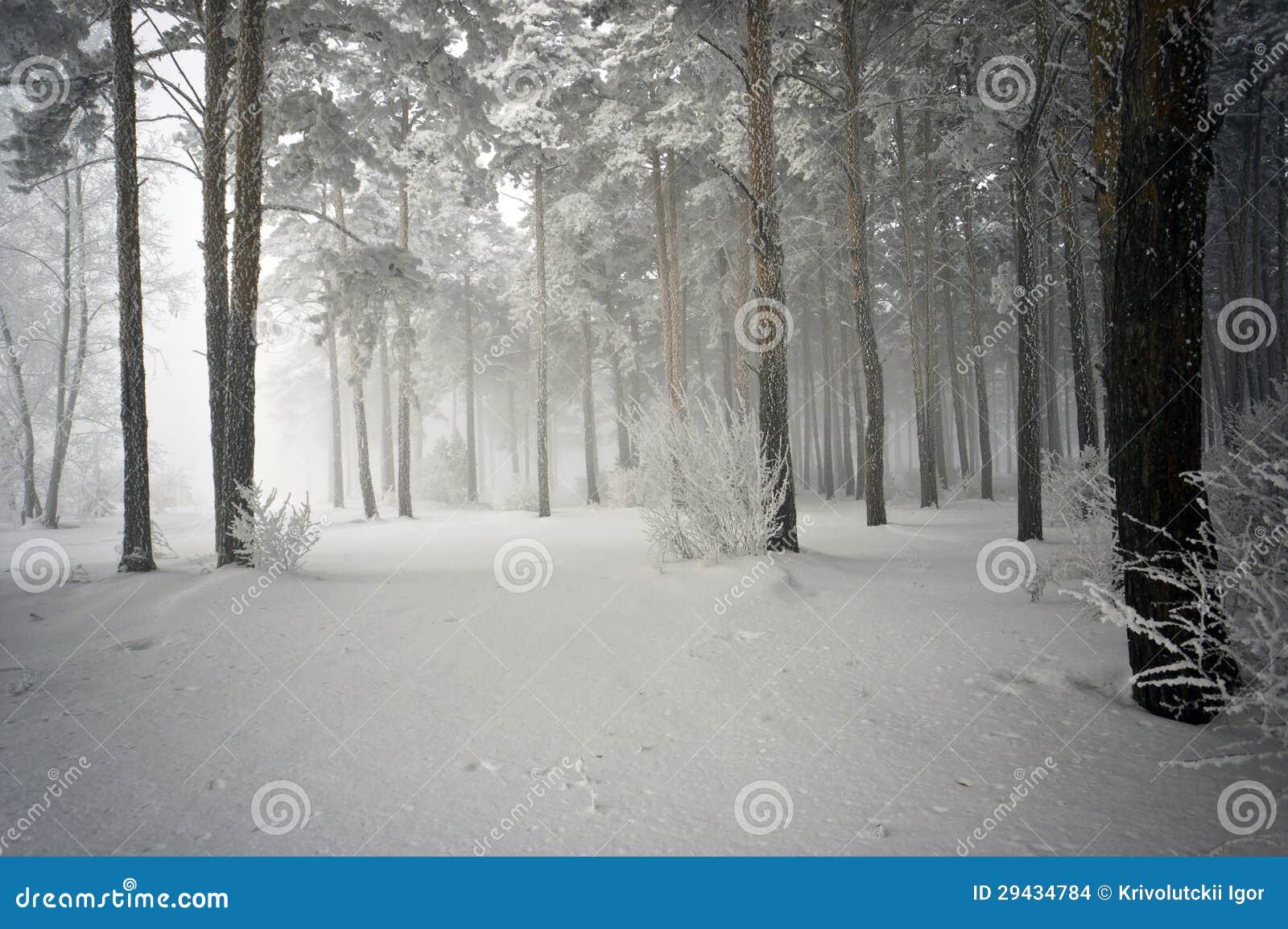 Сестра в лесу фото 20 фотография