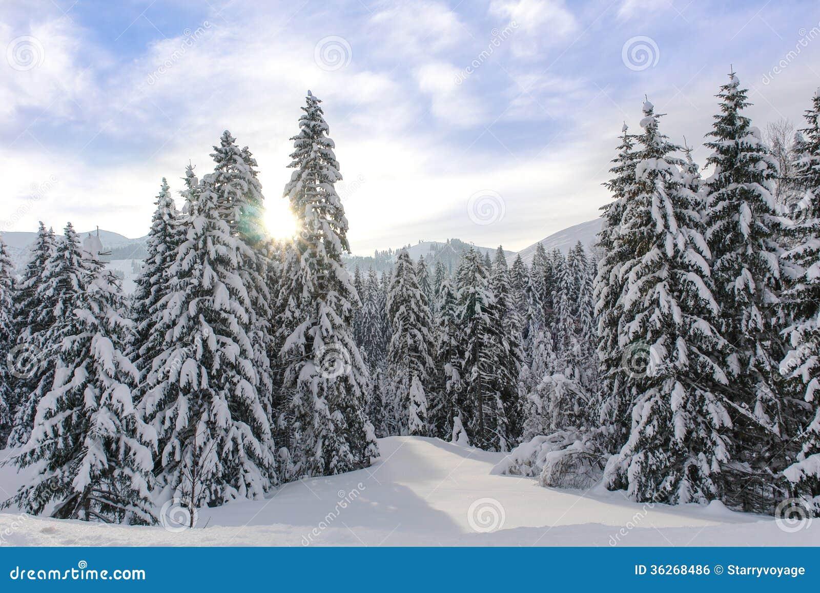Snowy Alpine Trees Xi Stock Photo Image Of Mountain 36268486