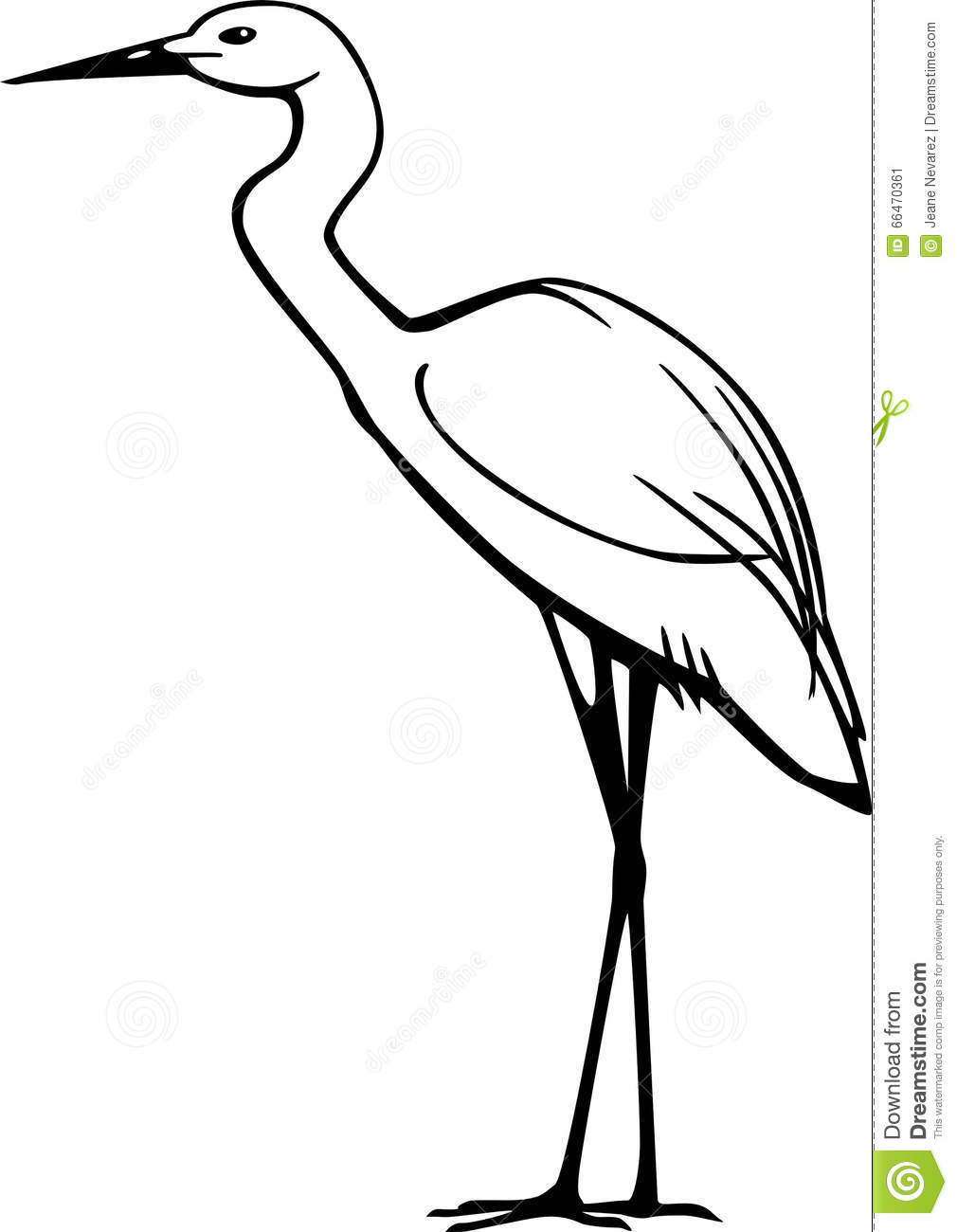 Snowy Egret Stock Vector Illustration Of Line Wading