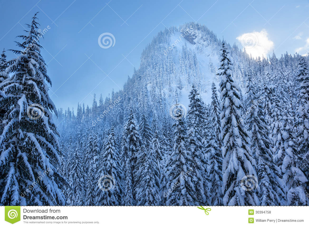 Snowy evergreen Images and Stock Photos. 4,938 Snowy evergreen ...