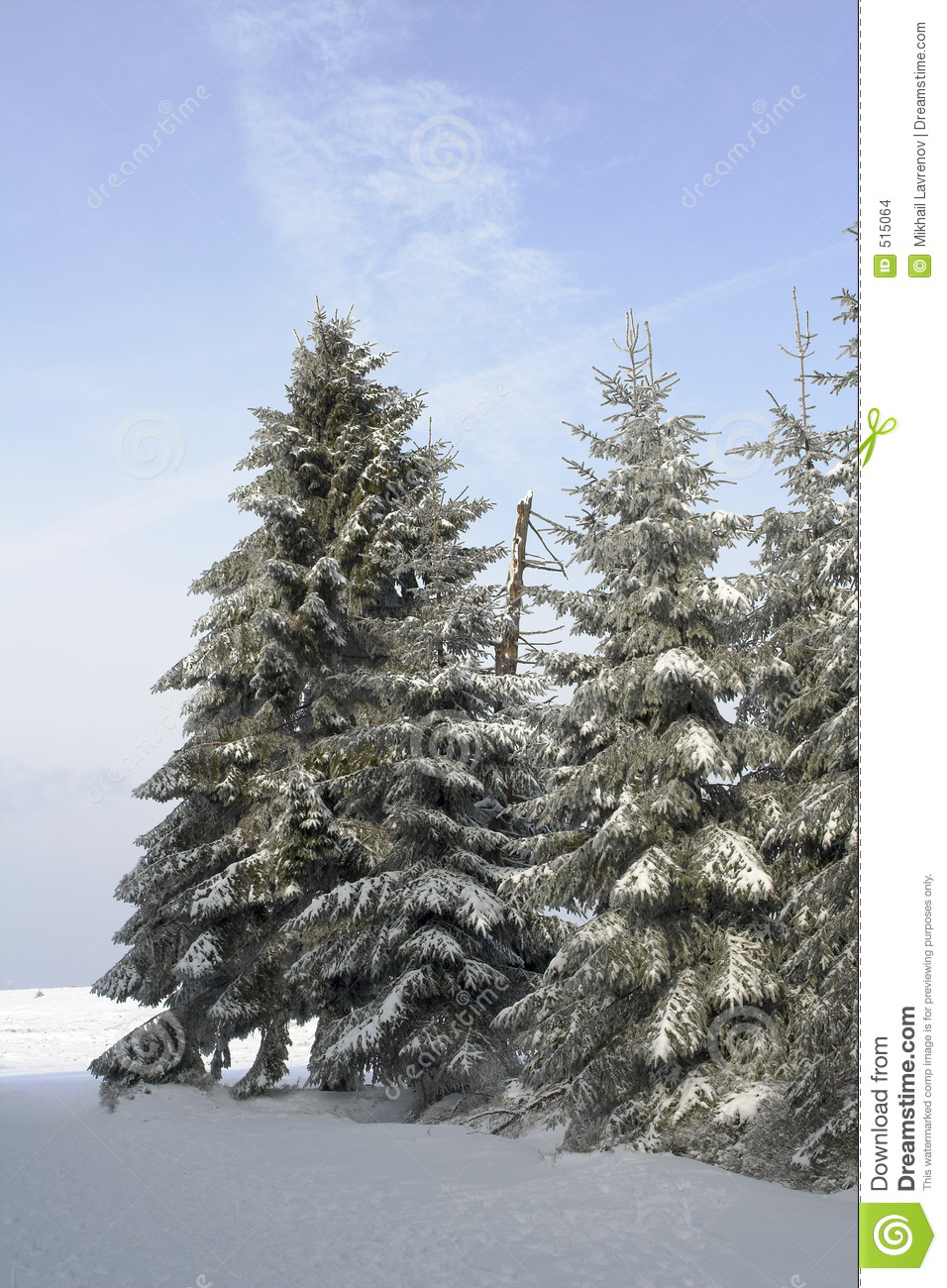 snowy fir trees forest - photo #36