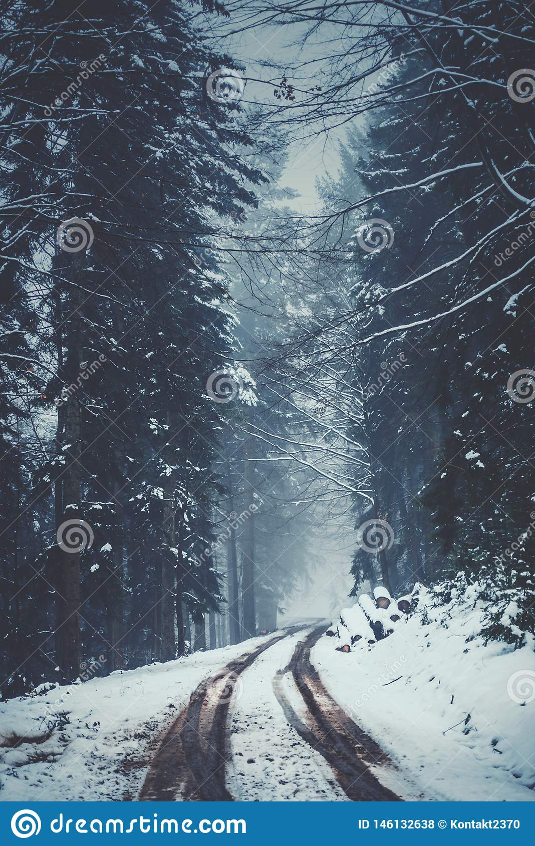 Snowy and Foggy Street in a winter forest