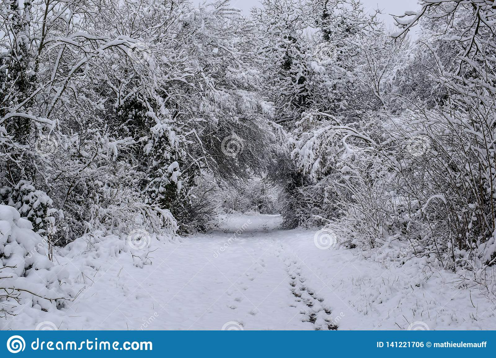 Snowy Forest Trail in campagna francese durante il Natale condisce/inverno