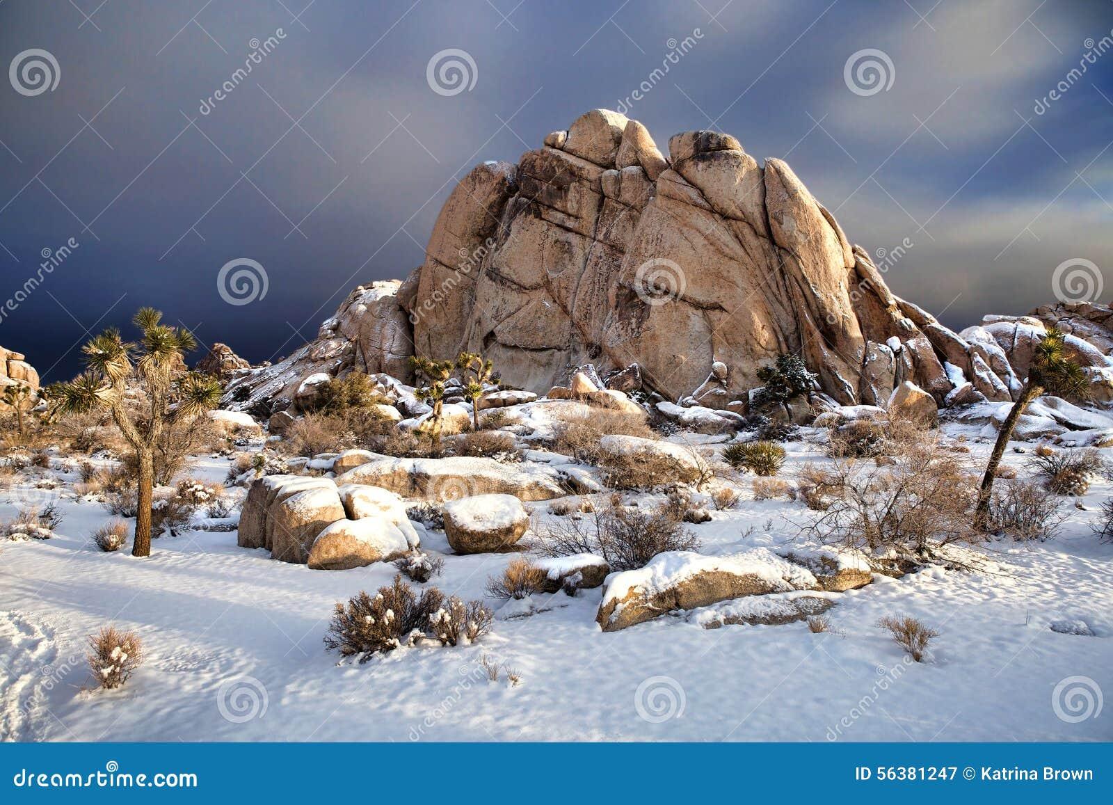 Snowy Landscape In Joshua Tree National Park Stock Image