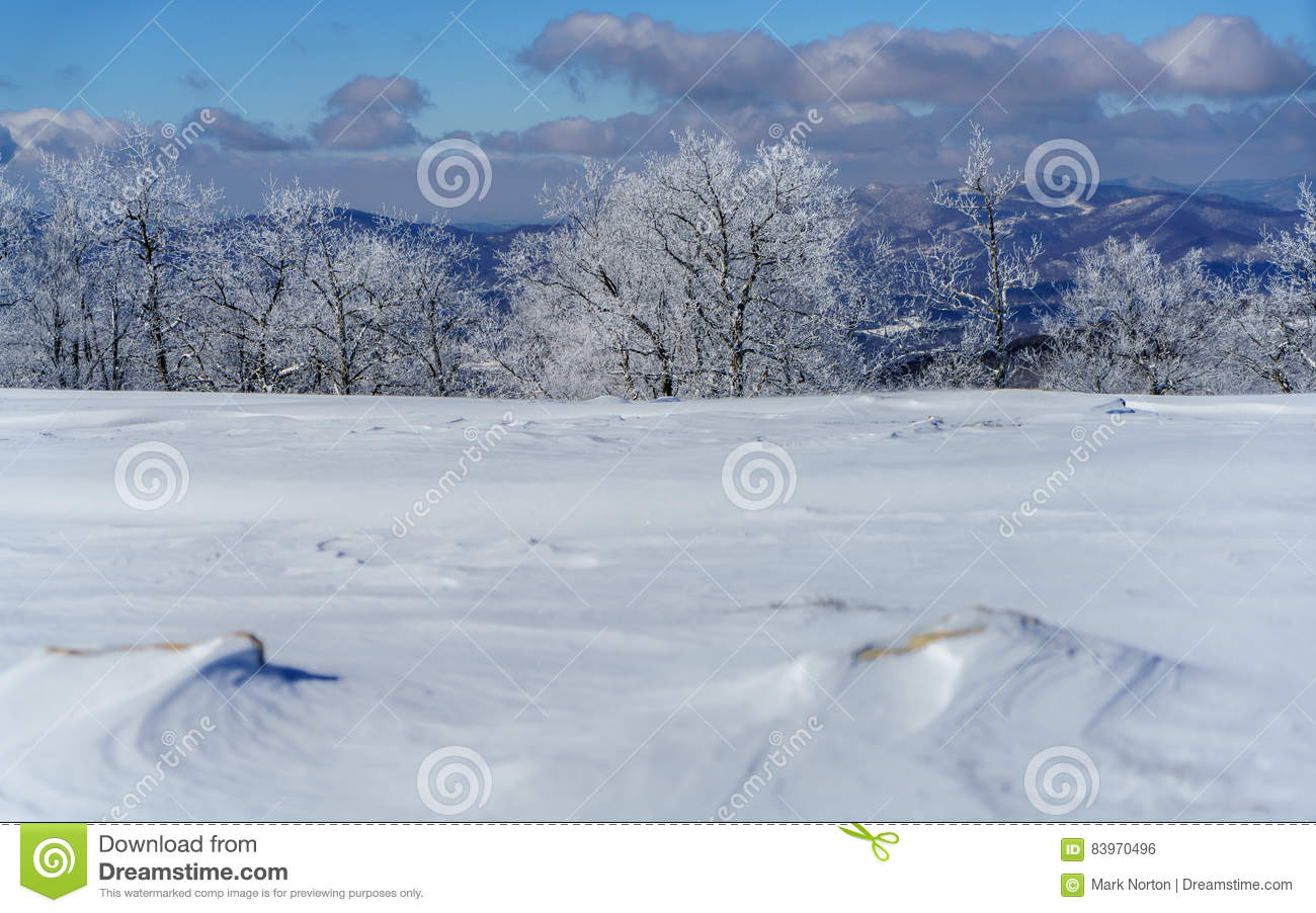 A Snowy Meadow Stock Photo Image Of Background Forest