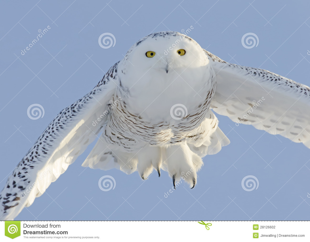 Why do Owls have different colour eyes  OwlPedia