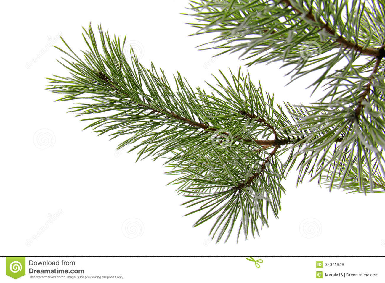 Snowy Pine Branch On White Royalty Free Stock Image - Image: 32071646