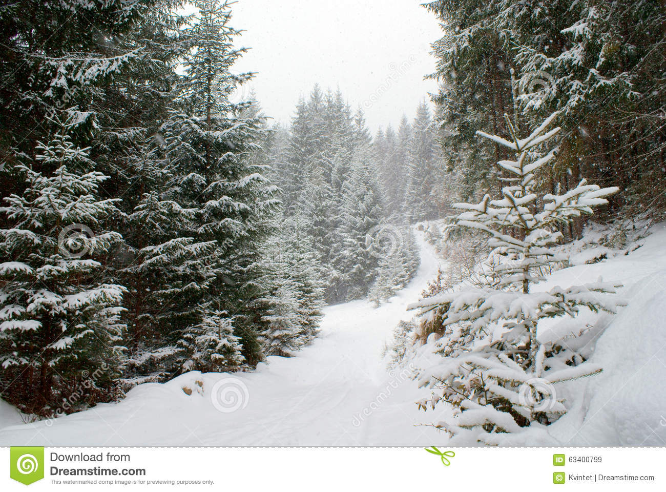 snowy fir trees forest - photo #19