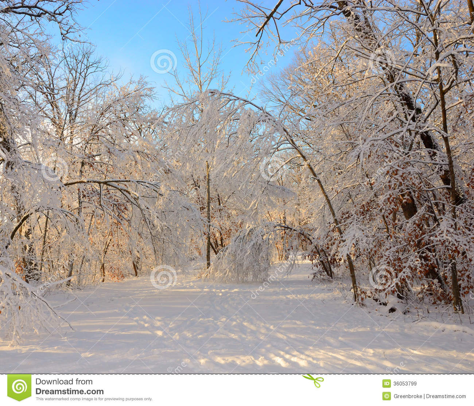 Cross-country Skiing & Snowshoeing - Seney - U.S. Fish and ...